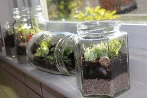Jam Jar Terrarium